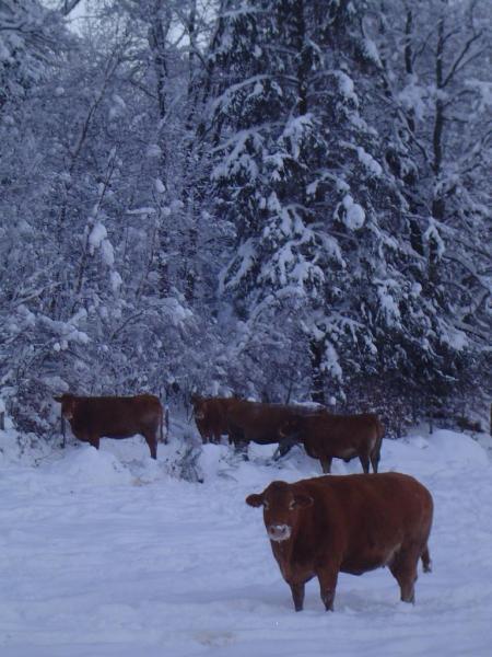 neige décembre 2010 004