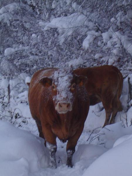 neige décembre 2010 005