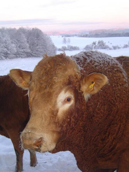 neige décembre 2010 007