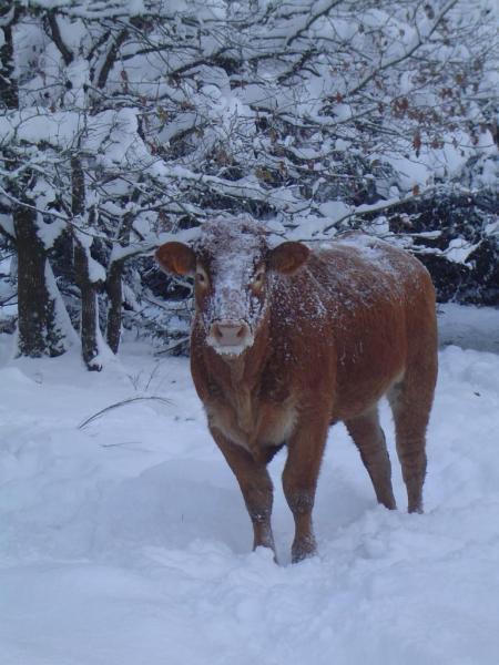 neige décembre 2010 015