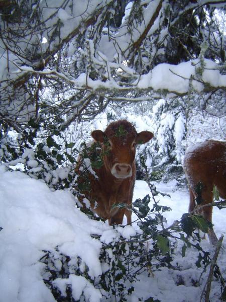 neige décembre 2010 022