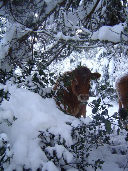 neige décembre 2010 023