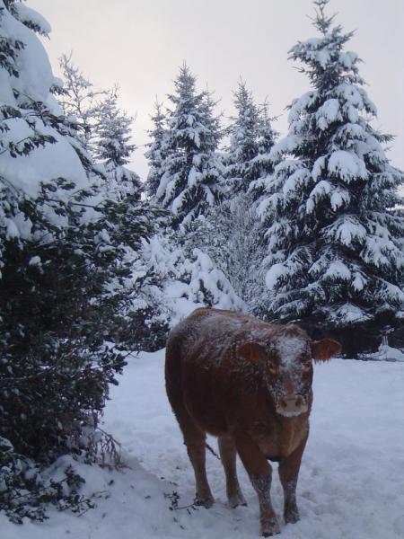 neige décembre 2010 024