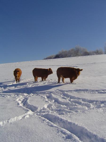neige décembre 2010 034