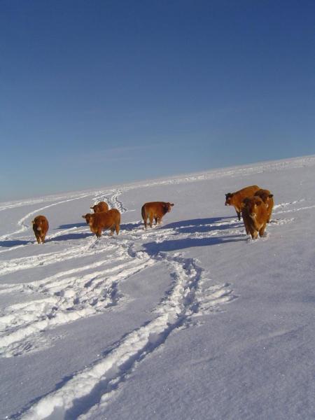 neige décembre 2010 035